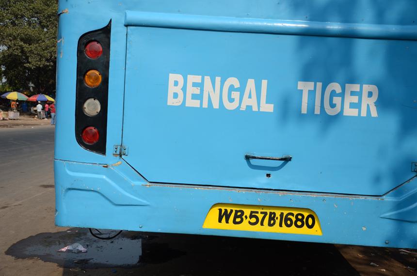 Alis Balbierius. Bengalijos tigras – žodžiai, kurie asocijuojasi ne tik su nykstančia gyvūnų rūšimi...