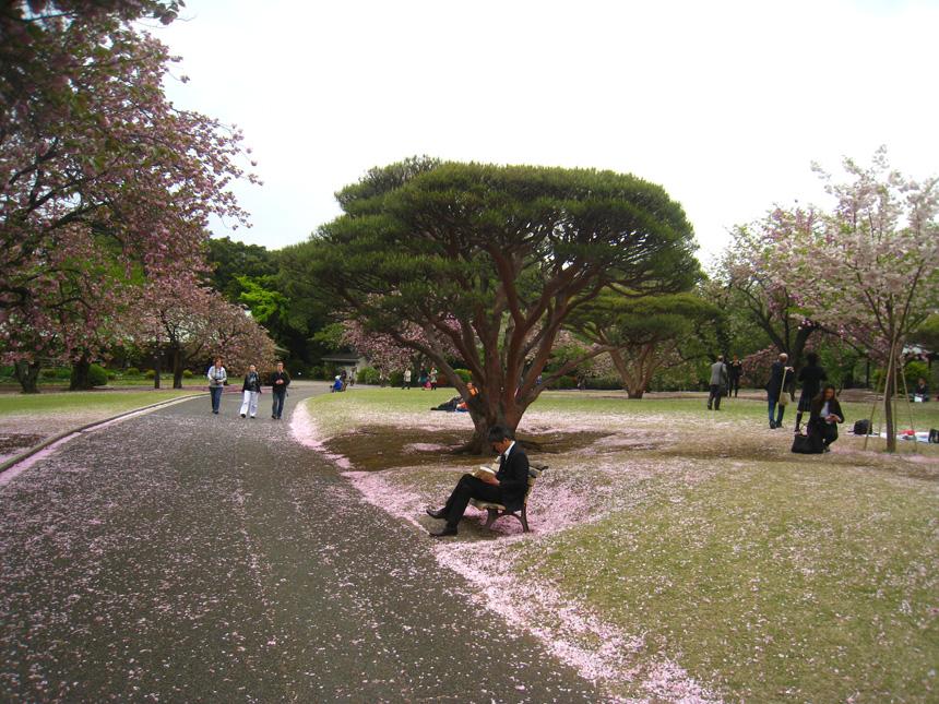 Ramybė Tokijo parke