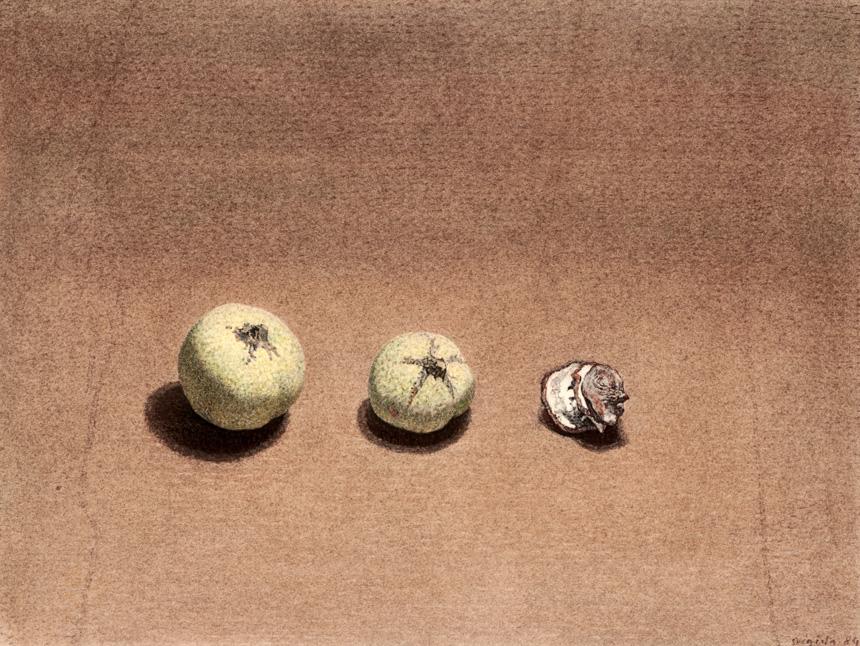 """Algimantas Švėgžda. """"Trys svarainiai"""", popierius, anglis, pastelė,  1984, LDM nuosavybė"""