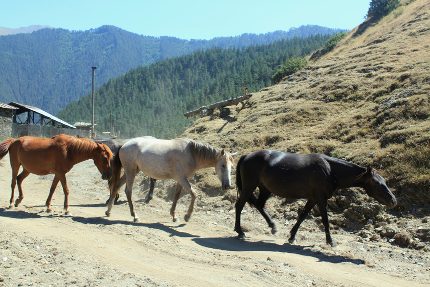 Arklių eilė. Autorės nuotraukos