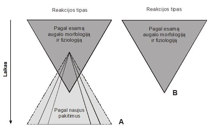 Schema Nr. 1: Augalų reakcijos tipai veikiant žemoms temperatūroms. A – augalo kokybinis pasikeitimas, veikiant žemai kritinei temperatūrai (ištisinės linijos apatiniame trikampyje rodo dažnai pasitaikančius nuostolius); B – augalo žūtis, nesant kokybiniams pasikeitimams. Schemos autorius – Alvydas Šimkūnas.