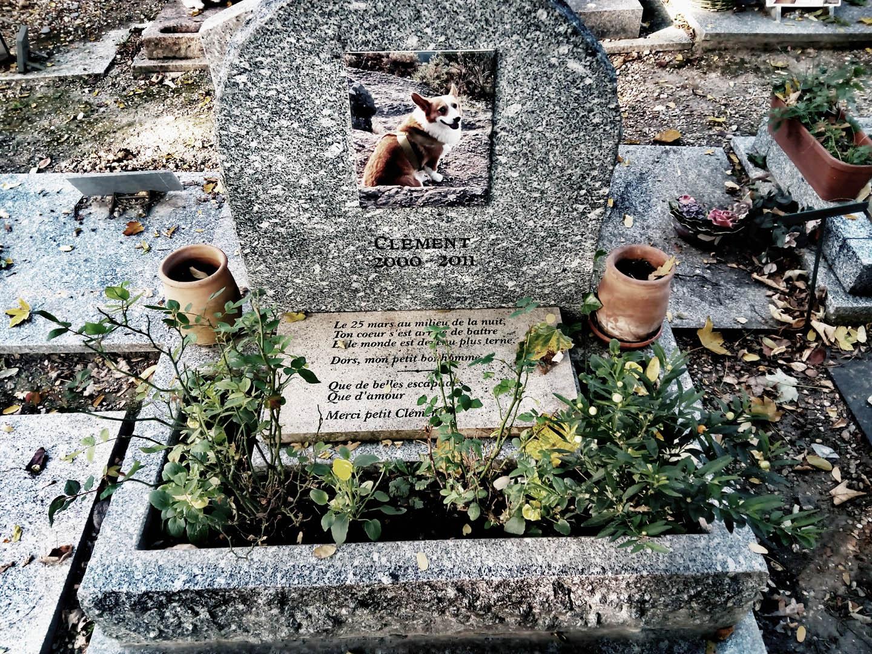 Michelio Houellebecqo šuns Klemenso kapas. Autorės nuotraukos