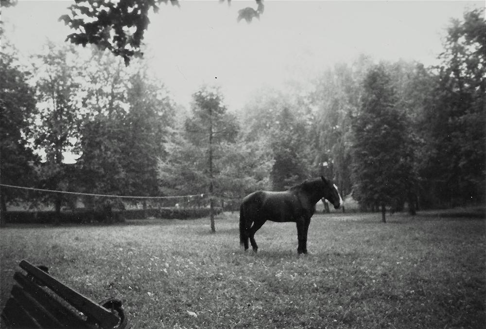 Arklys Naujosios Vilnios psichiatrinės ligoninės teritorijoje, 1998 m. vasara (?). Gyčio Norvilo nuotrauka